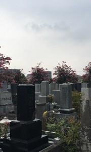 浄光寺墓地−基本−霊園全体写真