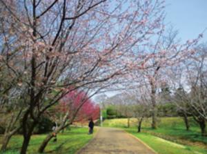 桜 改葬許可証 改葬 許可申請書 申請書 佐倉市 千葉県